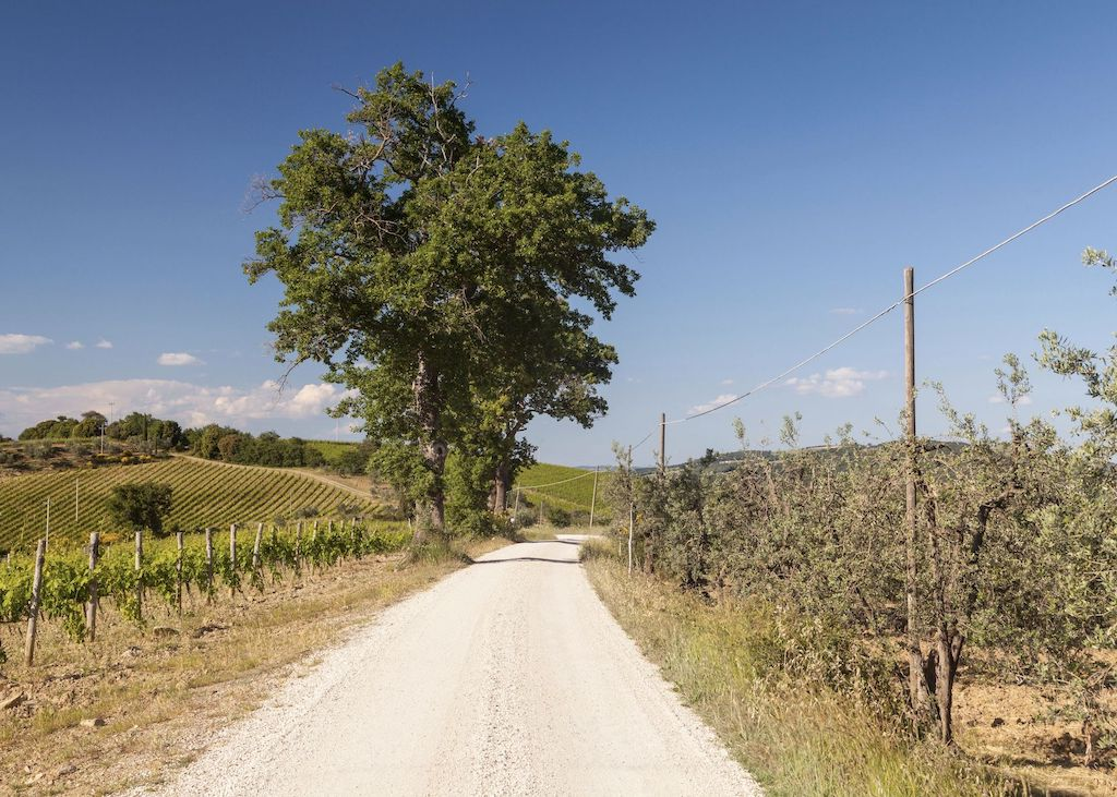 Cycling strade bianche in Tuscany